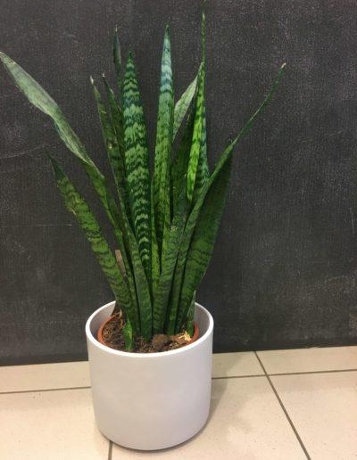Plante-6